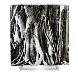 Mangrove Tentacles  Shower Curtain by Douglas Barnard