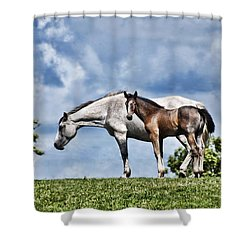 Mare And Foal Shower Curtain by Steve Purnell