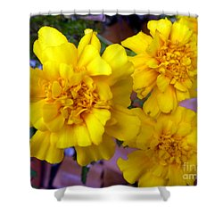 Marigold 3 Shower Curtain by Alys Caviness-Gober