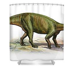 Massospondylus Carinatus, A Prehistoric Shower Curtain by Sergey Krasovskiy