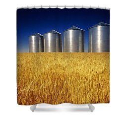 Mature Winter Wheat Field With Grain Shower Curtain by Dave Reede