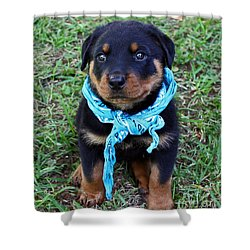 Maxx Shower Curtain by Rebecca Morgan