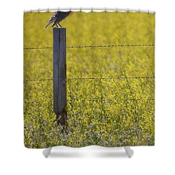 Meadowlark Singing Shower Curtain by Randall Nyhof