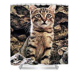 Mediterranean Wild Babe Cat Shower Curtain by Stelios Kleanthous