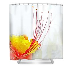 Mexican Bird Of Paradise Shower Curtain by Kume Bryant