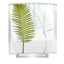 Mexican Cycad Leaf Mexico Shower Curtain by Piotr Naskrecki