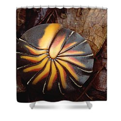 Millipede Rolled Into Ball Position Shower Curtain by Mark Moffett