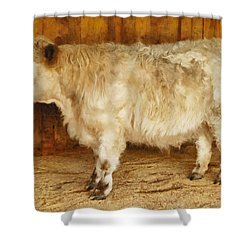 Mini Moo Shower Curtain by Steve Taylor