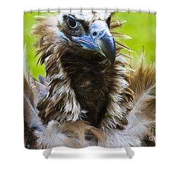 Monk Vulture 4 Shower Curtain by Heiko Koehrer-Wagner