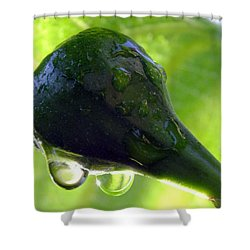 Morning Dew Figs Shower Curtain by Karen Wiles