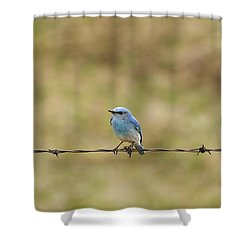 Mountain Bluebird On A Fence Wire Shower Curtain by Philippe Widling