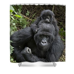 Mountain Gorilla Mother And 1.5yr Old Shower Curtain by Suzi Eszterhas