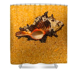 Murex Shell Shower Curtain by Cheryl Young