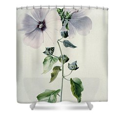 Musk Mallow Shower Curtain by Marie-Anne