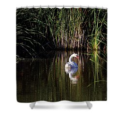 Mute Swan Shower Curtain by Jim Nelson
