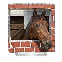 My Friend Shower Curtain by Heiko Koehrer-Wagner
