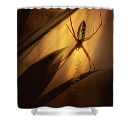 My Parlour Shower Curtain by Amy Tyler