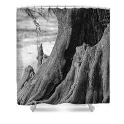 Natural Cypress Shower Curtain by Carolyn Marshall