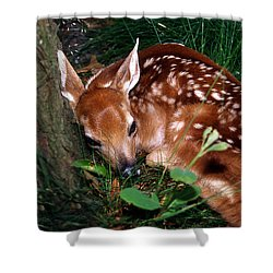 Nature's Precious Creation Shower Curtain by Skip Willits