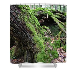 New Hampshire Usa Forest Shower Curtain by Erin Paul Donovan