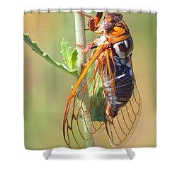 Noisy Cicada Shower Curtain by Shane Bechler