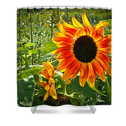 Noontime Sunflowers Shower Curtain by Jiayin Ma
