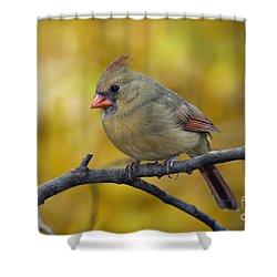 Northern Cardinal Female - D007849-1 Shower Curtain by Daniel Dempster