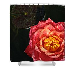 Nymphaea Shower Curtain by Susan Herber
