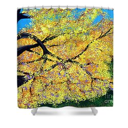 October Fall Foliage Shower Curtain by Alys Caviness-Gober
