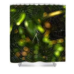 Oh The Web We Weave Shower Curtain by Barbara Middleton