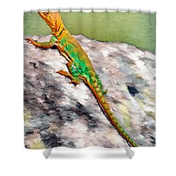 Oklahoma Collared Lizard Shower Curtain by Jeff Kolker