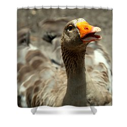 Old Mother Goose Shower Curtain by Karen Wiles