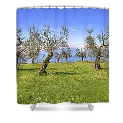 olive grove on Lake Gardan Shower Curtain by Joana Kruse