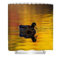On Golden Waters Shower Curtain by Mike  Dawson