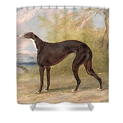 One Of George Lane Fox's Winning  Shower Curtain by George Garrard