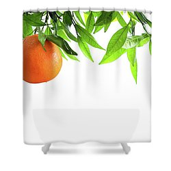 Orange Branch Shower Curtain by Carlos Caetano