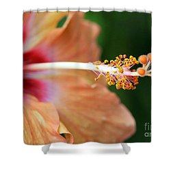 Orange Hibiscus Shower Curtain by Sabrina L Ryan