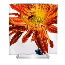Orange You Happy Shower Curtain by Susan Smith