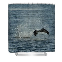 Osprey Fishing Shower Curtain by Ernie Echols