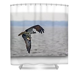 Osprey Grab Shower Curtain by Brian Wallace