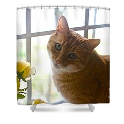 Our New Princess Shower Curtain by Byron Varvarigos