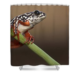 Painted Reed Frog Botswana Shower Curtain by Piotr Naskrecki