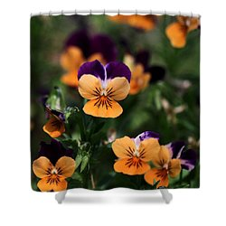 Pansy Garden Shower Curtain by Sabrina L Ryan