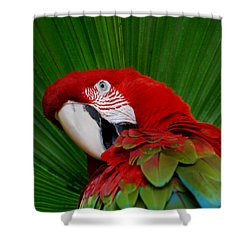Parrot Head Shower Curtain by Skip Willits