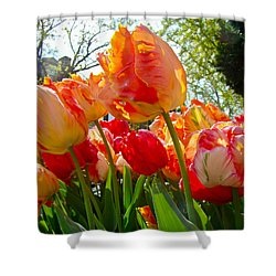 Parrot Tulips In Philadelphia Shower Curtain by Mother Nature
