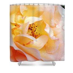 Pastel Rose Shower Curtain by Kaye Menner