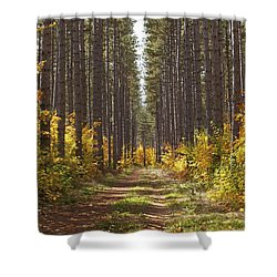 Path Into The Forest In Autumn Sault Shower Curtain by Susan Dykstra