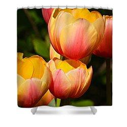 Peachy Tulips Shower Curtain by Byron Varvarigos
