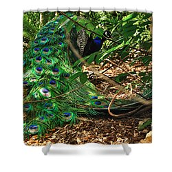 Peacock Hiding Shower Curtain by Kaye Menner