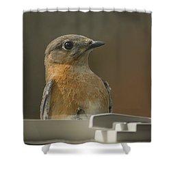Peeping Bluebird Shower Curtain by Kathy Clark